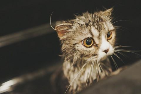 ニキビ 洗顔 水洗顔 ぬるま湯洗顔