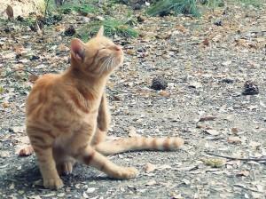 かゆい 猫