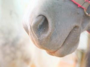 馬 鼻毛 ニキビ 鼻の中 治し方 原因