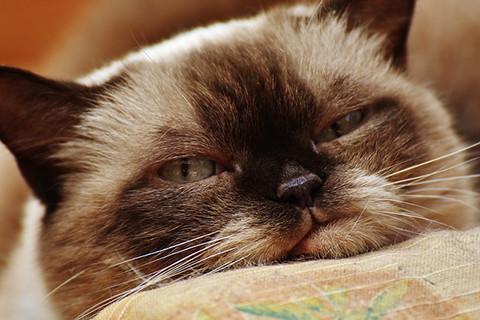cat-1640268_640